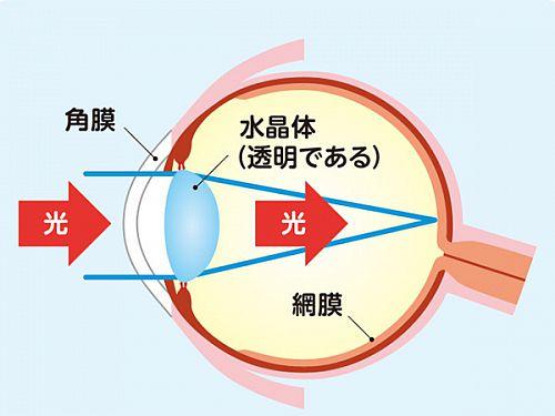 健康な眼のイラスト